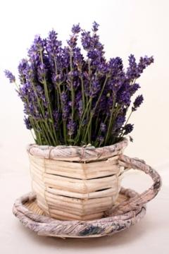 levendula_lavender_lavandula_augistifolia_brilla_term__szetes_nat__r_kozmetikumok_4__3_.jpg
